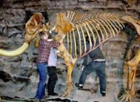 Skeleton of a mastodon