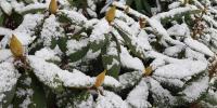 Winter Storm in the Poconos