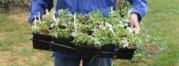 Rescuing R.I.'s wild plants